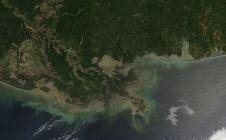 Marée noire dans le Golfe du Mexique